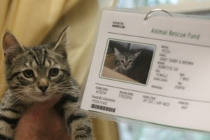 ARF kitten adopt pizza