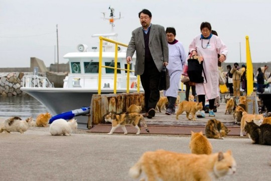 Cats greet tourists as they get off a boat at the harbour on Aoshima Island, known to locals as 'Cat Island'.    Reuters: Thomas Peter