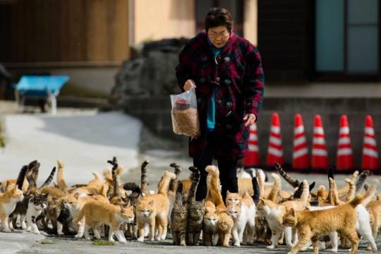 Village nurse and Ozu city official Atsuko Ogata carries a bag of cat food to the designated feeding place on Aoshima Island.