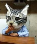 cat head at desk