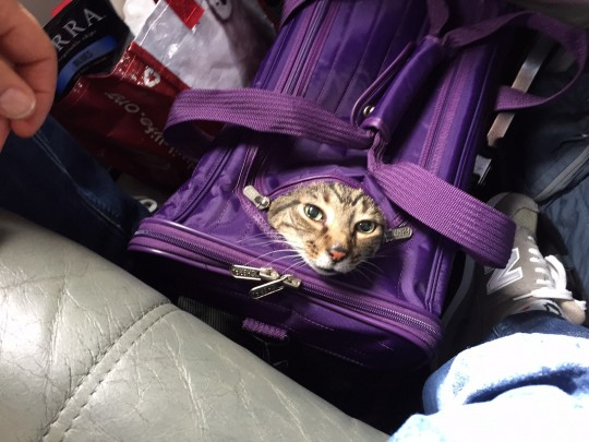 cat carrier on airplane