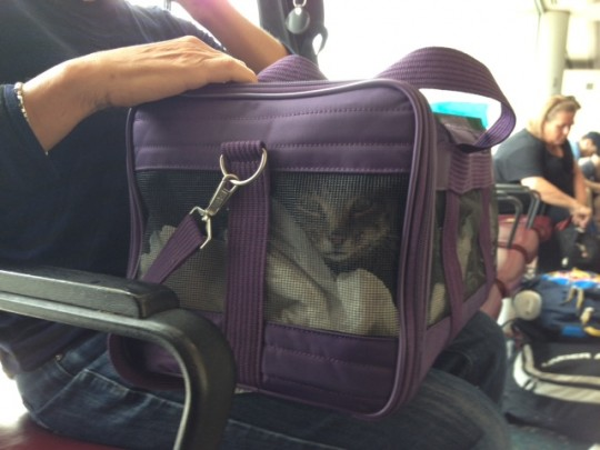 Toby in carrier at airport