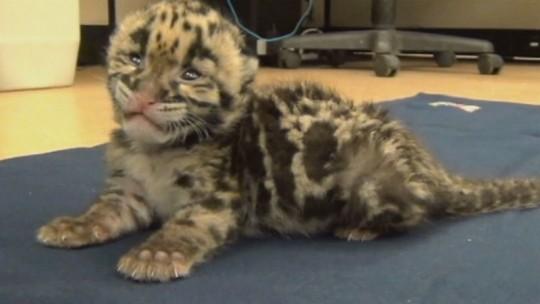 baby leopard spots