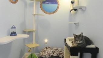 Boarding my cat The Happy Cat Hotel Bonsai room