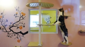 Boarding my cat, The Happy Cat Hotel