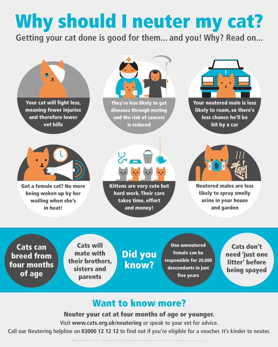 Why to neuter your cat