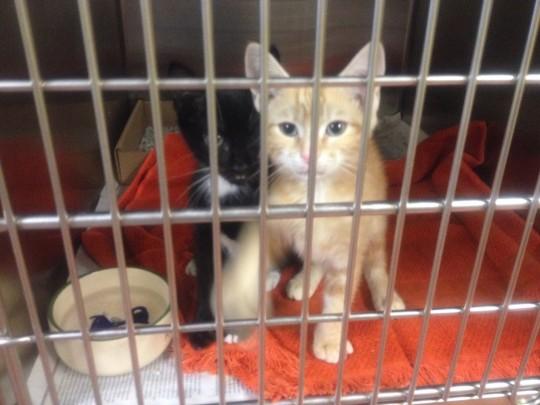 petsafe cat litter box