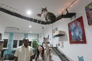 Lion City Kitty cat museum Singapore